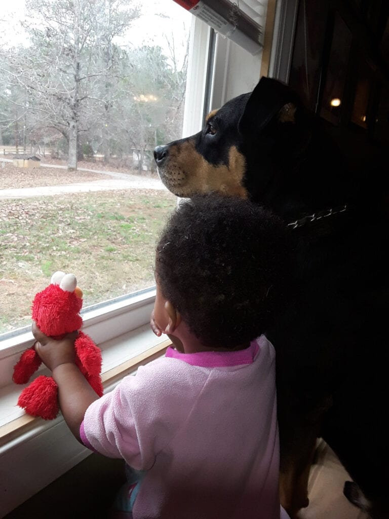 Cody and Sophia - Rottweiler and toddler looking out window