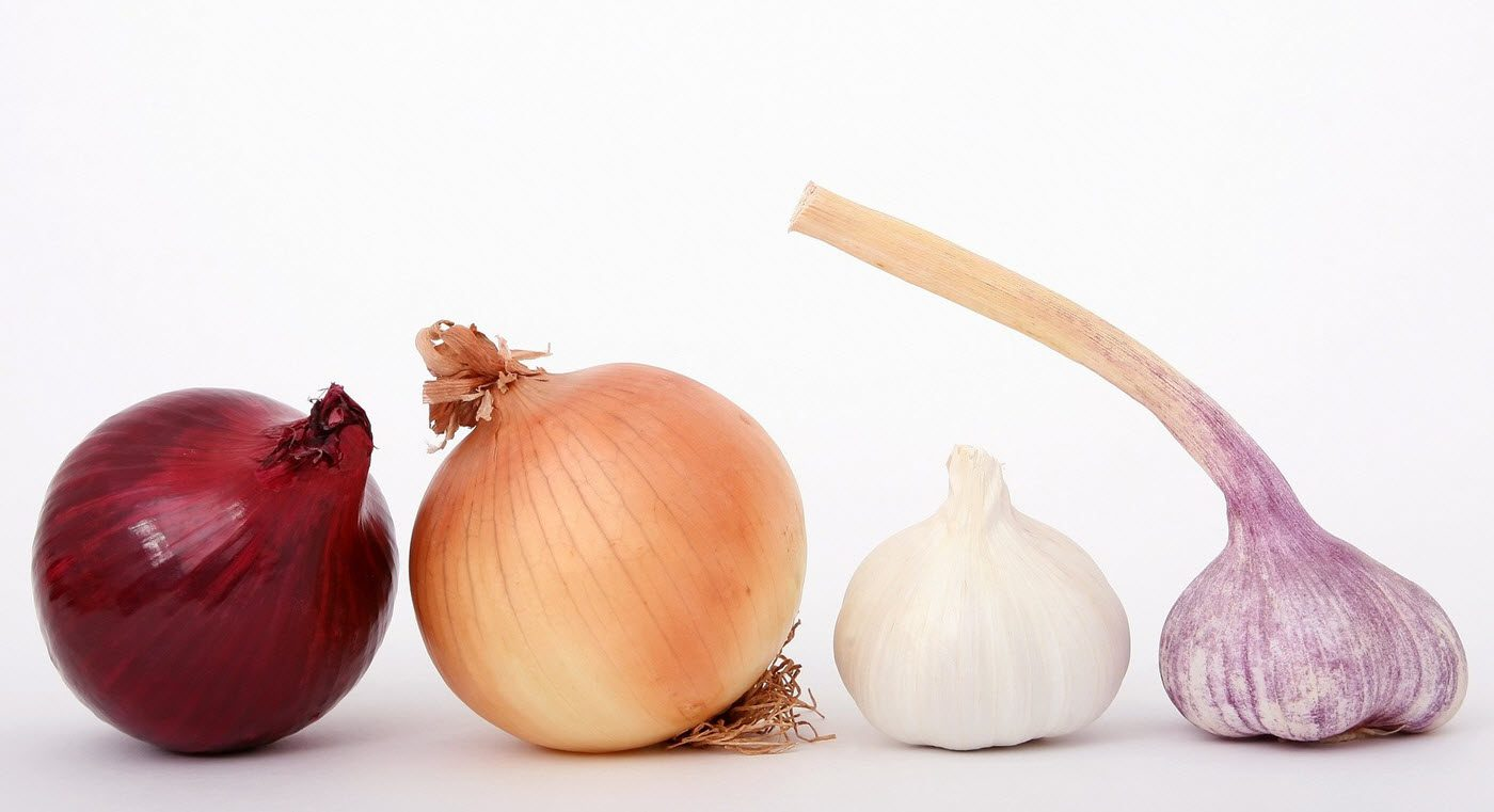 Is garlic safe for dogs - garlic cloves - onions