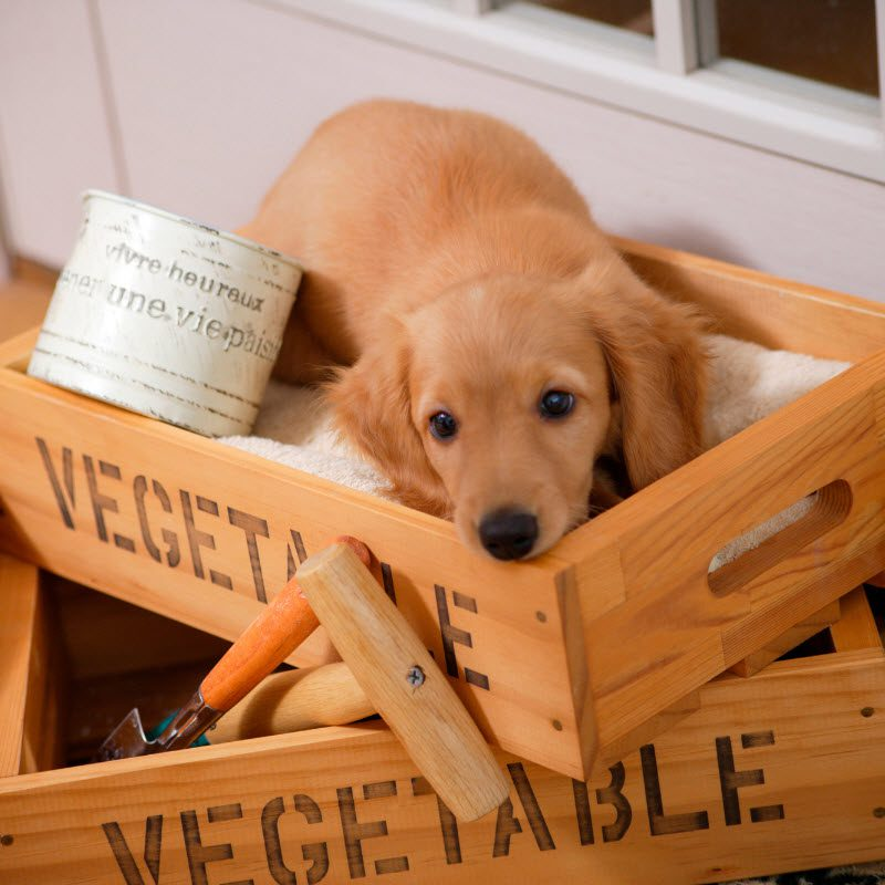 Crate training your puppy with another dog in the house